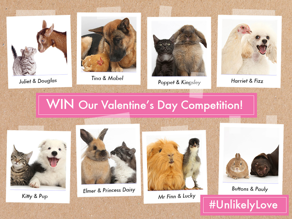 unlikely_love_valentines_blog_full_uk