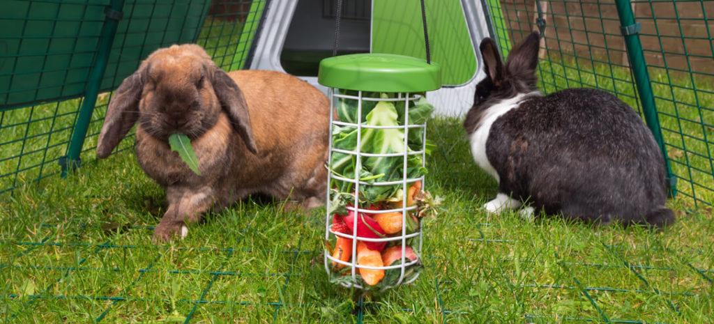 En Caddi godbitholder til kanin som henger inni en Eglu-luftegård.