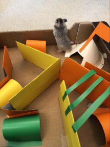 En hamster som forsøker å klatre ut av labyrinten.