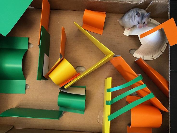En hamster sett ovenfra inni en pappeske gjort om til en labyrint.