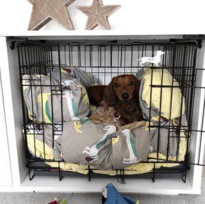 """Hunden """"MiloTheMiniDach ligger komfortabelt i hundeburet sitt på en stor og deilig hundeseng."""