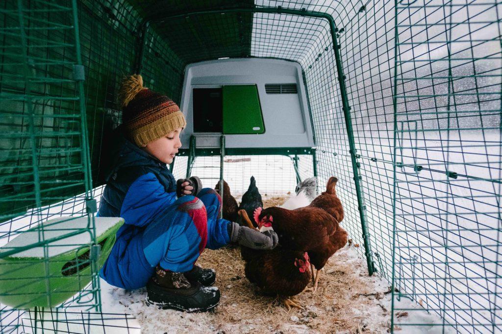 Et barn som mater hønene sine, sittende inni Eglu-hønsehuset.