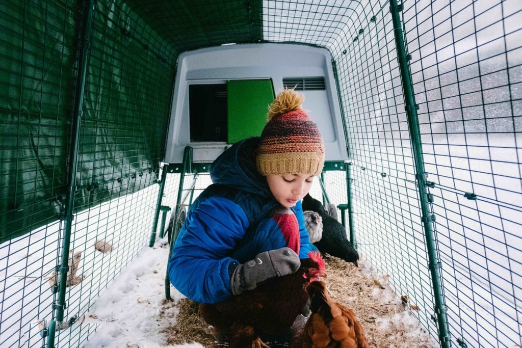 A boy in a snowy Eglu coop with his chickens