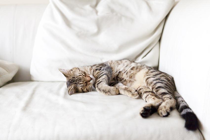 En lat, stripete, voksen katt ligger utstrekt over sofaen.
