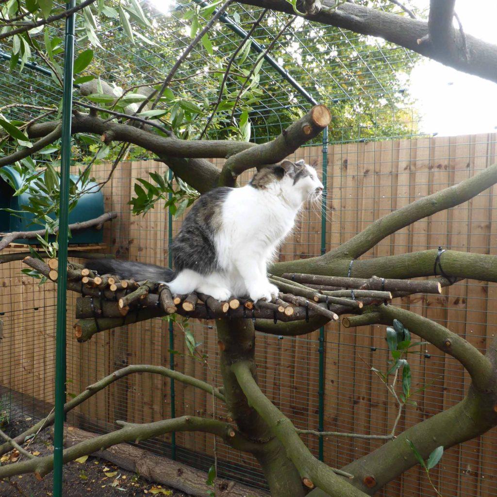Eieren har til og med snekret et platå oppi treet som katten kan sitte på og se utover hagen.