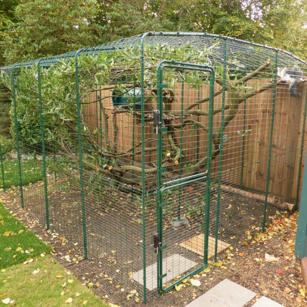 Treet inni luftegården har masse grener som brer seg utover, noe som gir katten et fantastisk klatrestativ!