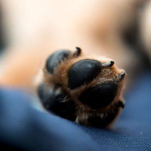 A dog's paw pad