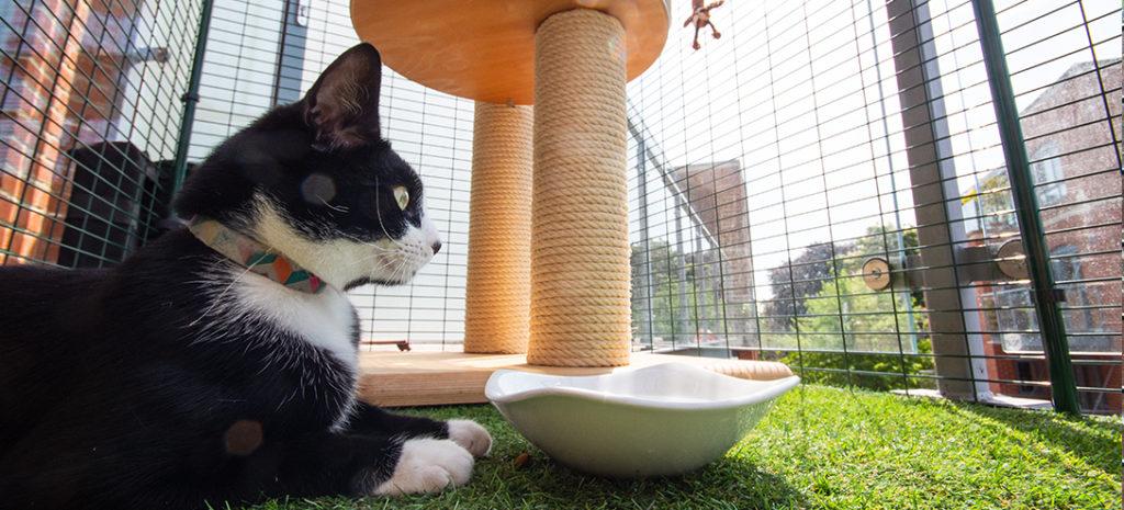 En svart og hvit katt som ligger i kattegården sin, ved siden av et klorestativ.