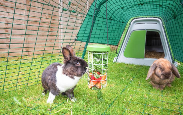 To kaniner inni Eglu hutch/kaninbur med en Caddi godbitholder full av friske grønnsaker som er viktig for kaninens kosthold.