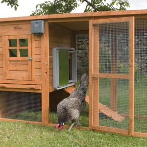 En grå, brun og hvit høne som går ut av hønsehuset sitt av tre og hønsenetting, som har en automatisk dør fra Omlet installert