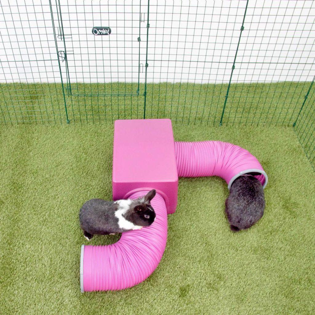To grå og hvite kaniner som leker sammen på gresset med det rosa Zippi tunnelsystemet sitt, med hus, fra Omlet