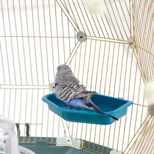 En undulat sitter med stjerten vendt mot kameraet mens den tar seg en dukkert i fuglebadet inni Geo fuglebur.