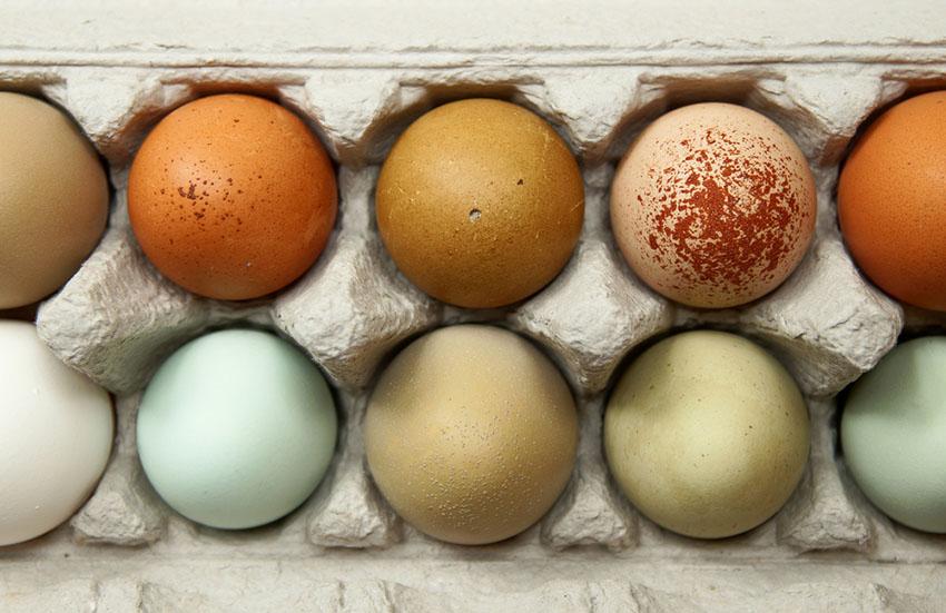 Egg i mange forskjellige farger, liggende i en eggekartong. Blå, grønne, gule, rødbrune, hvite og olivenfargede egg.