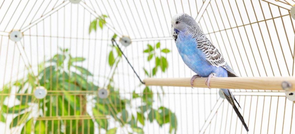 En liten, blå undulat står på pinnen av tre inni fugleburet Geo med gullfarget netting og grønne planter i bakgrunnen.