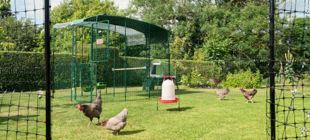 Vier kippen buiten in hun inloopren