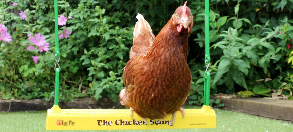 En gyldenbrun høne som sitter på den gule hønsehusken kjøpt hos Omlet.
