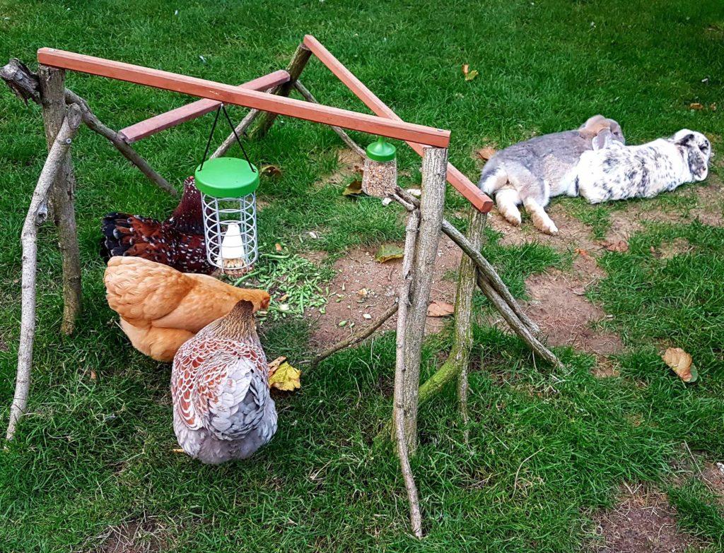 Her har eieren spikret sammen forskjellige pinner og planker for å lage en kreativ fôringsstasjon for hønene og kaninene sine, som koser seg på gresset ved siden av.