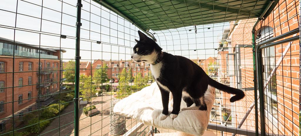 En svart og hvit, korthåret katt som står på en utkikkspost og ser utover byen i sin balkonggård for katter.