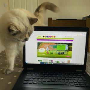 Katten Lunar går over kontorpulten og stopper opp for å titte på Omlets nettside - 'Der var det jammen høns, jo!'