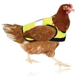 Omlets refleksvest for høns gjør at du enkelt kan holde øye med hønene dine når kveldens mørke nærmer seg.