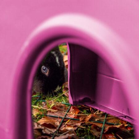 A blue eyed rabbit looking through a pink Zippi shelter