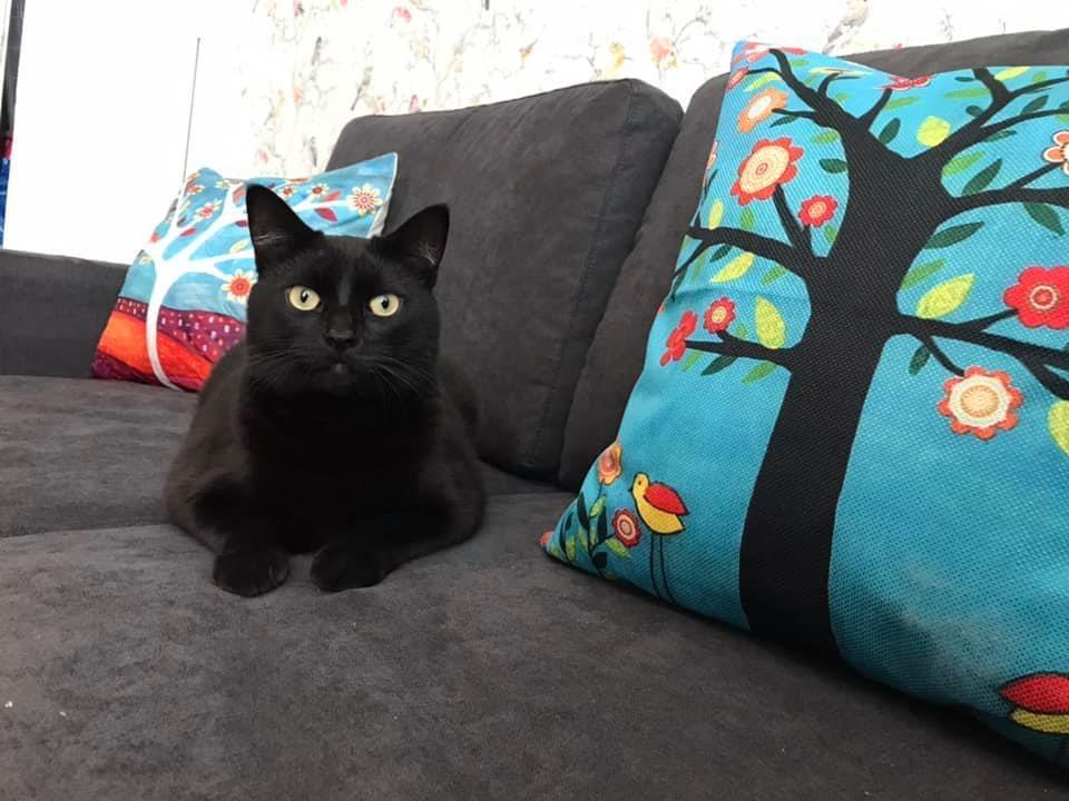 Harry on the sofa