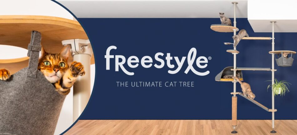 Freestyle set up and cat in a hammock on a cat tree