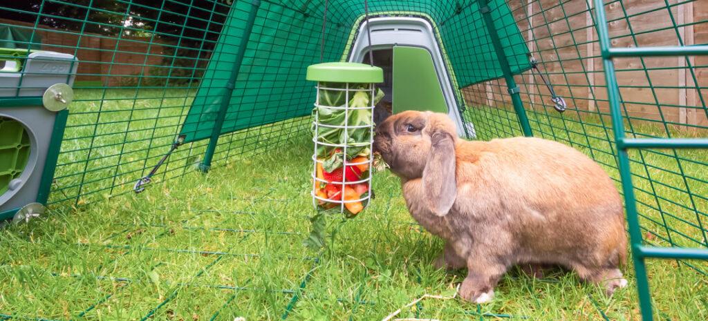 konijn in ren met Caddi snackhouder