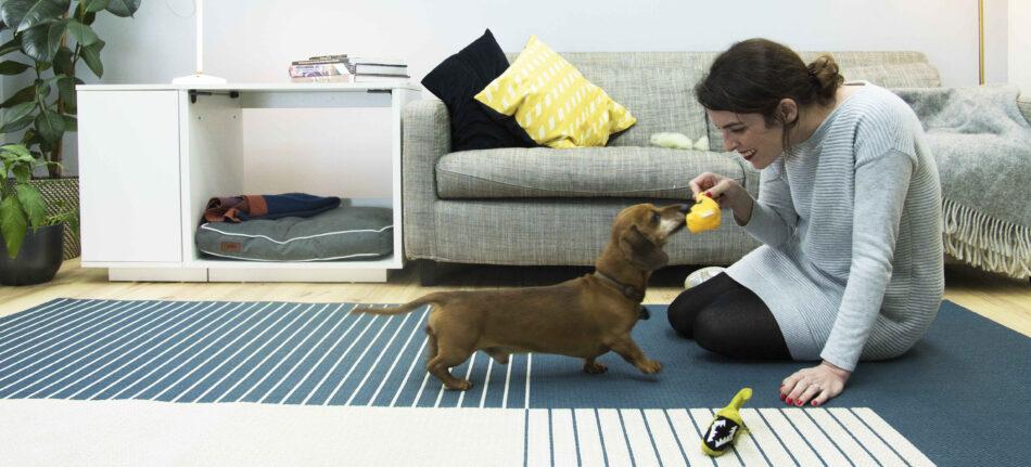 Een teckel speelt binnen met zijn eigenaar met een Fido Nook hondenmand op de achtergrond