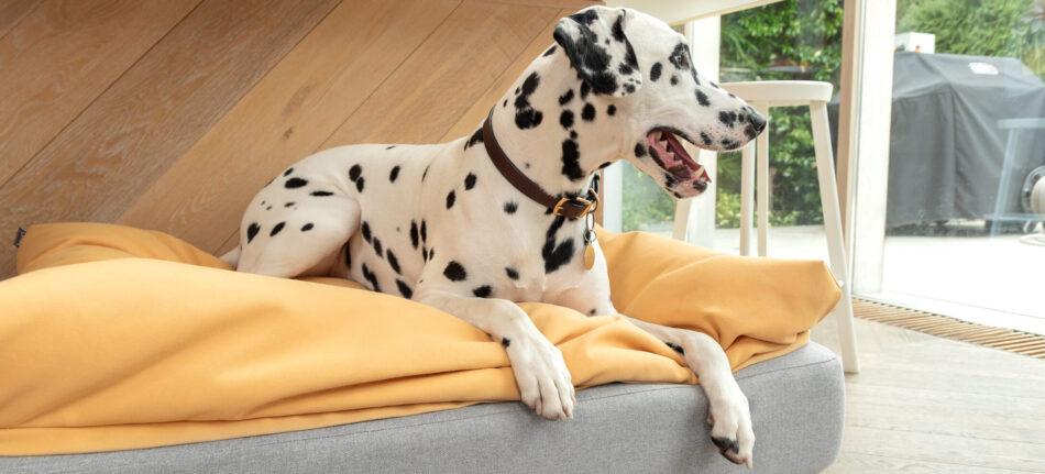 dalmatiër op een beanbag topper op de Topology hondenmand