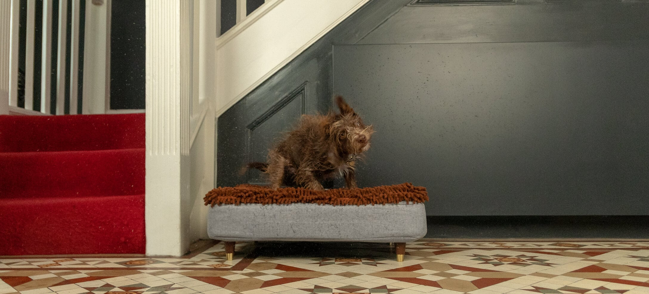 A brown dog shaking itself dry on the Topology bed