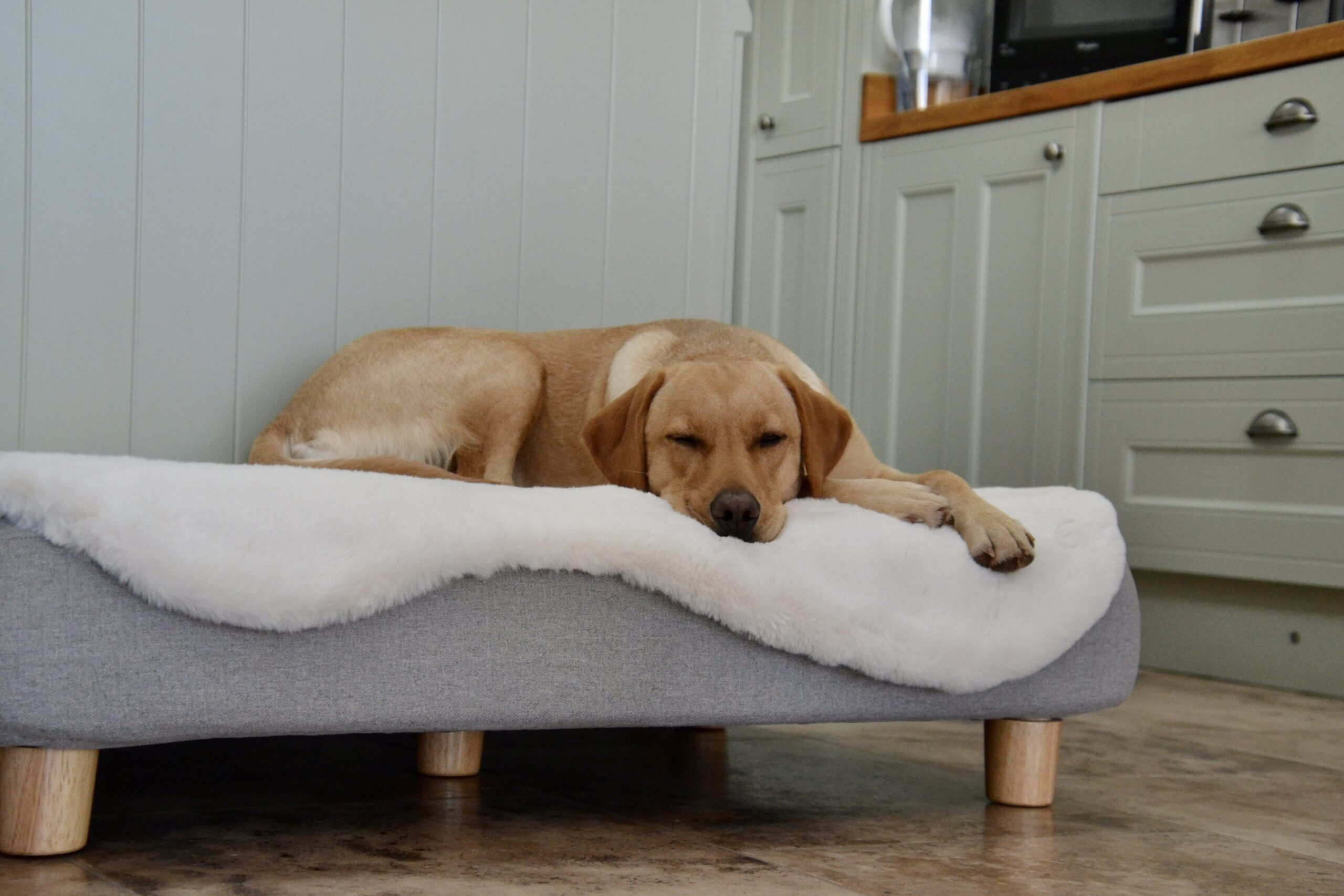 A Labrador lying on a Topology bed